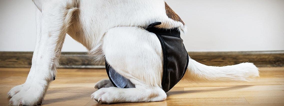 Läufigkeitshöschen Hund