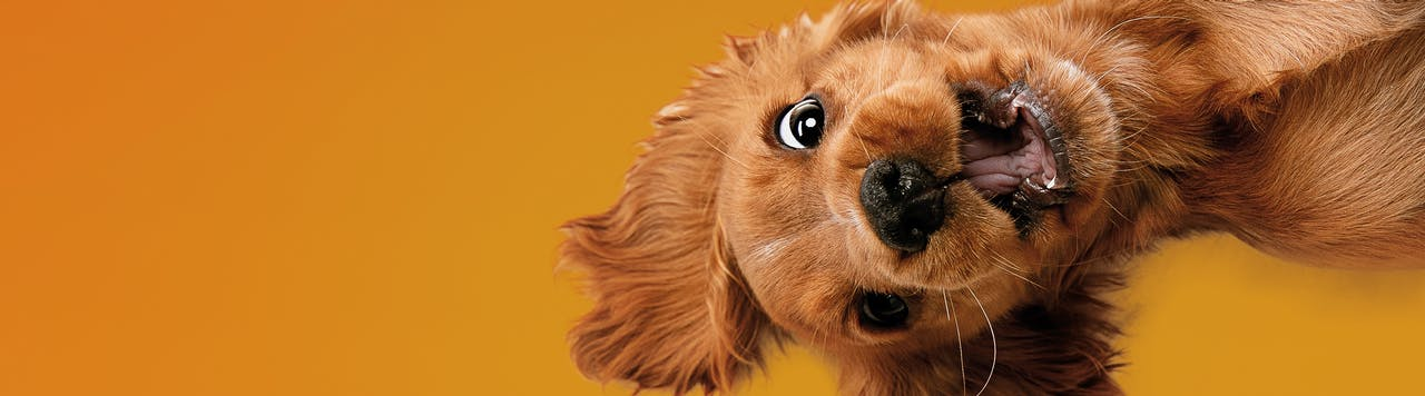 Tierische Tipps Wissenswertes zur Hundehaltung