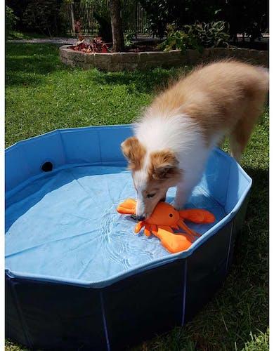 Produkttest Hunter Aqua Toy Hummer schwimmendes Hundespielzueg