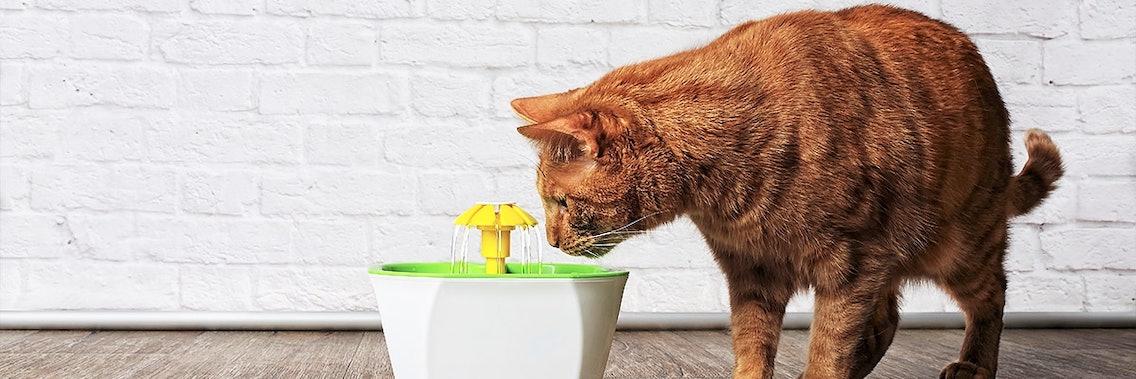 Trinkbrunnen für Katzen animieren zum Trinken