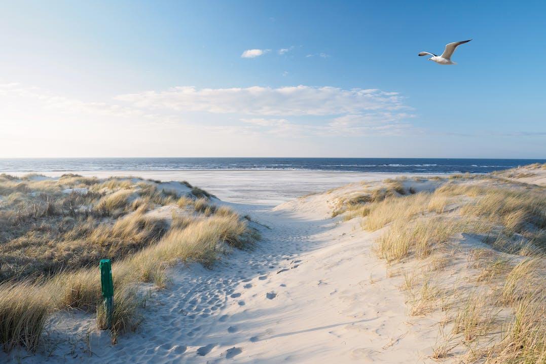 Langer Weg durch Sand mit Dünengras vor blauem Meer. Am hellblauen Himmel fliegt eine weiße Möwe.