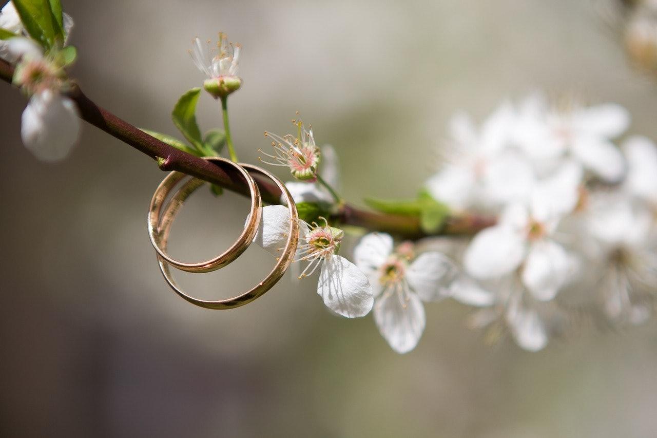 Goledene Eheringe, die dekorativ an einem Kirschblüten Ast hängen.