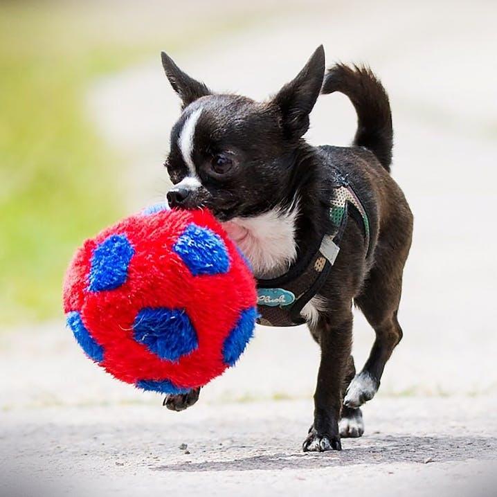 pets Premium Bürohund Oskar