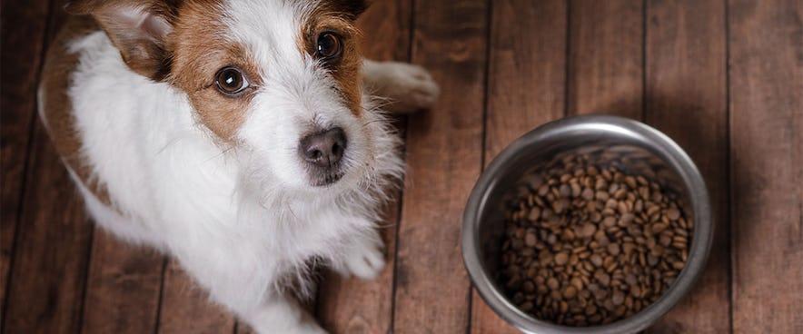 Futtermittelunverträglichkeit Hilfe Mein Hund Verträgt Kein