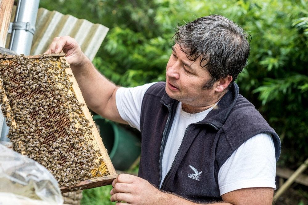 Bienen-Kleinwalsertal
