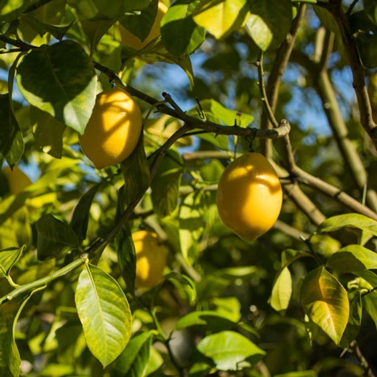Wertvolle, biologisch angebauten Inhaltsstoffe