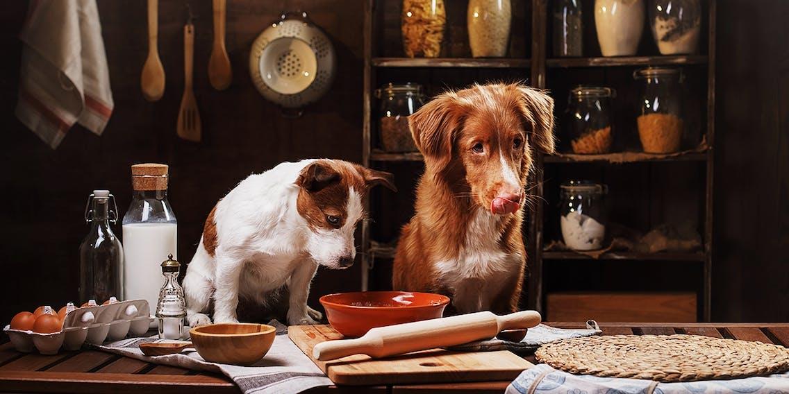 Leckerlis für das Hundetraining selber backen