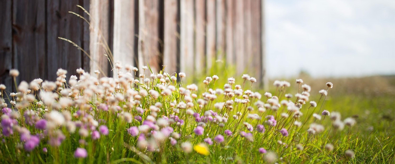Gartentipps im Mai: Der perfekte Rasen