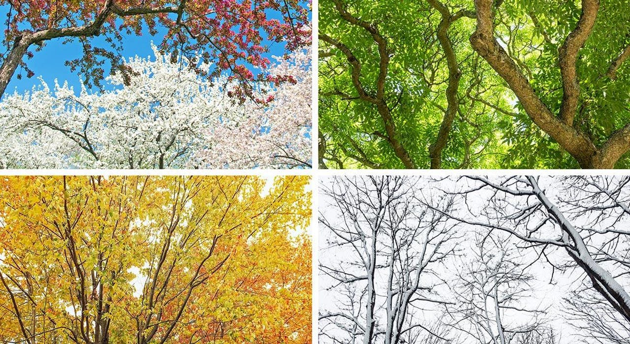 Photo of all seasons - spring, summer, fall, winter