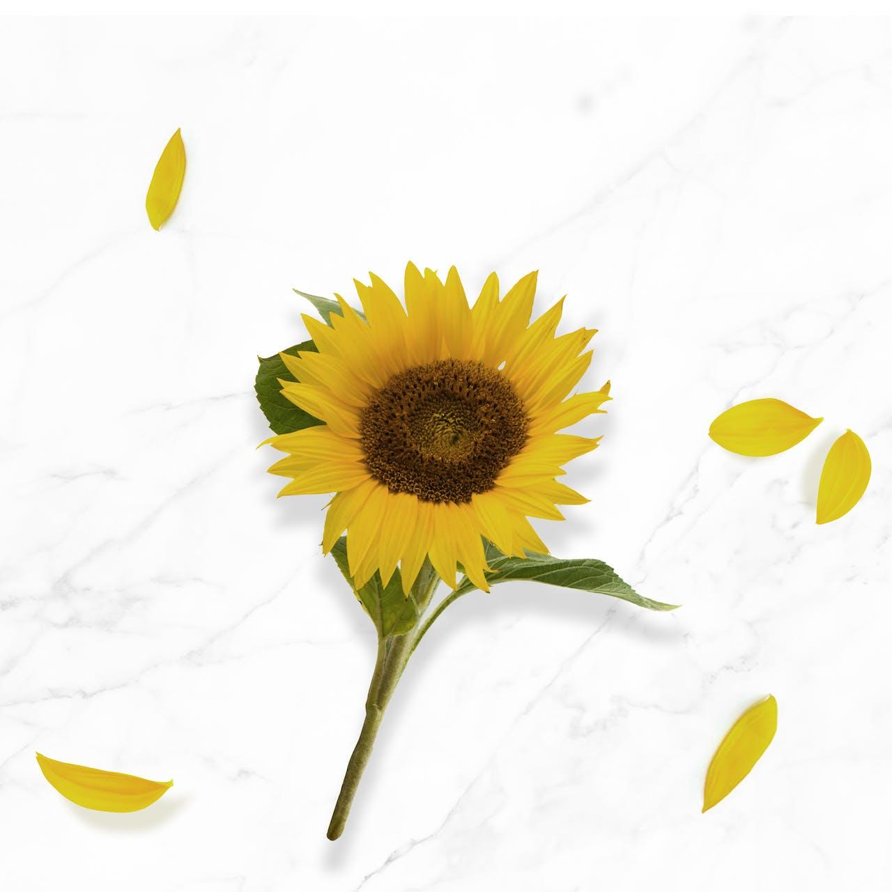 N.A.E. Inhaltsstoffe Bio-Sonnenblumenöl