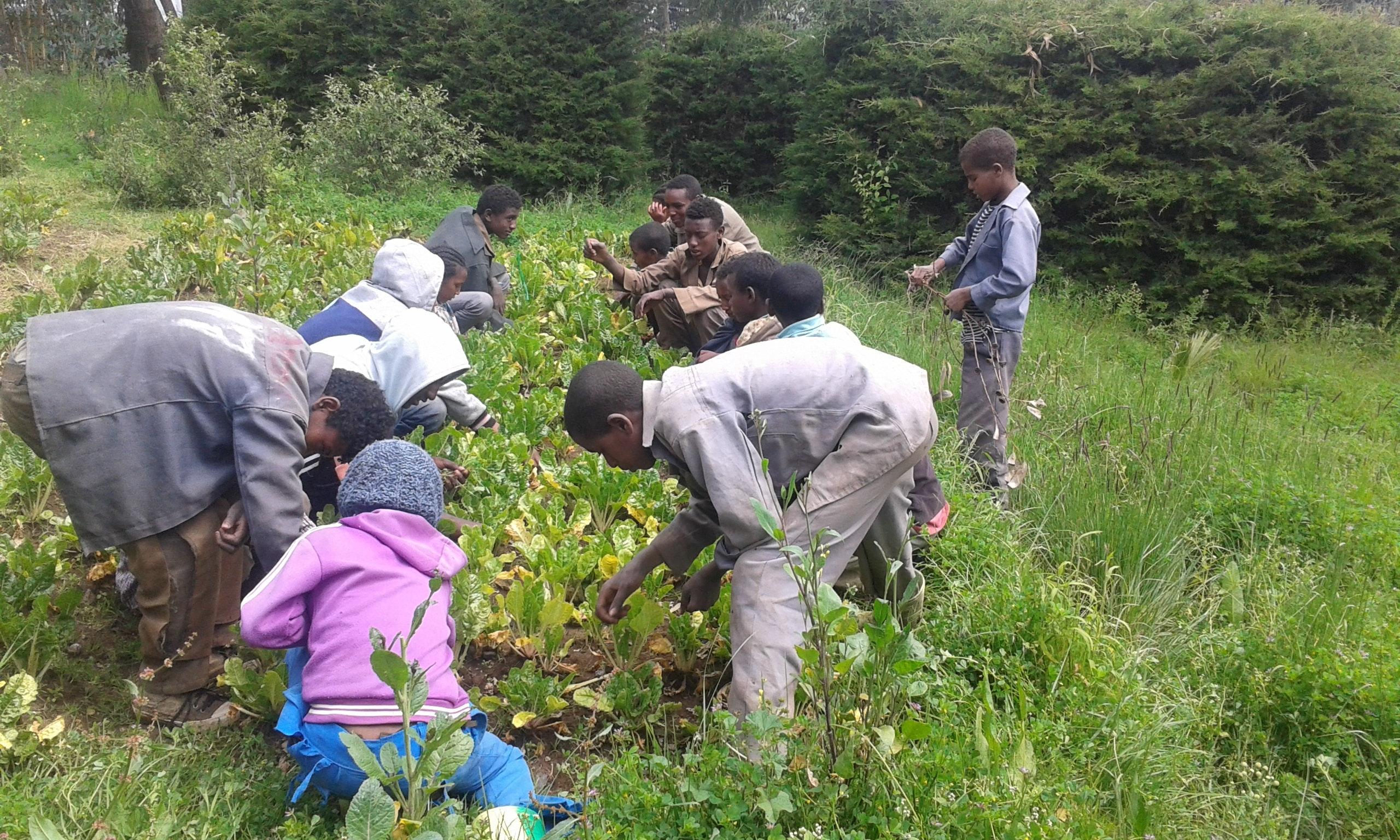 Landwirtschaftsschulung ® Welthungerhilfe