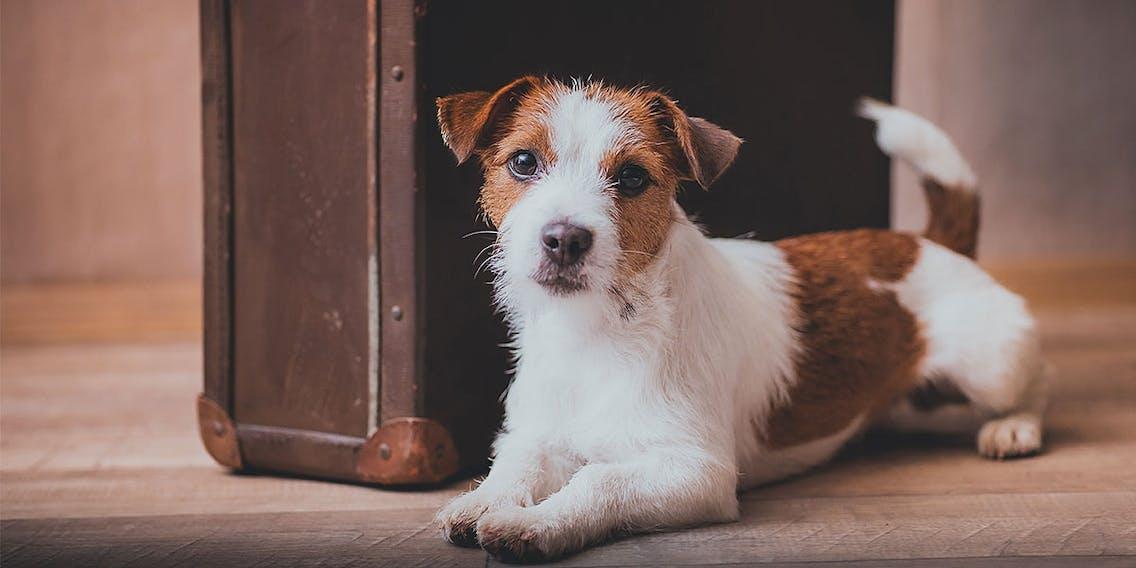 Reisevorbereitung für den Urlaub mit Hund