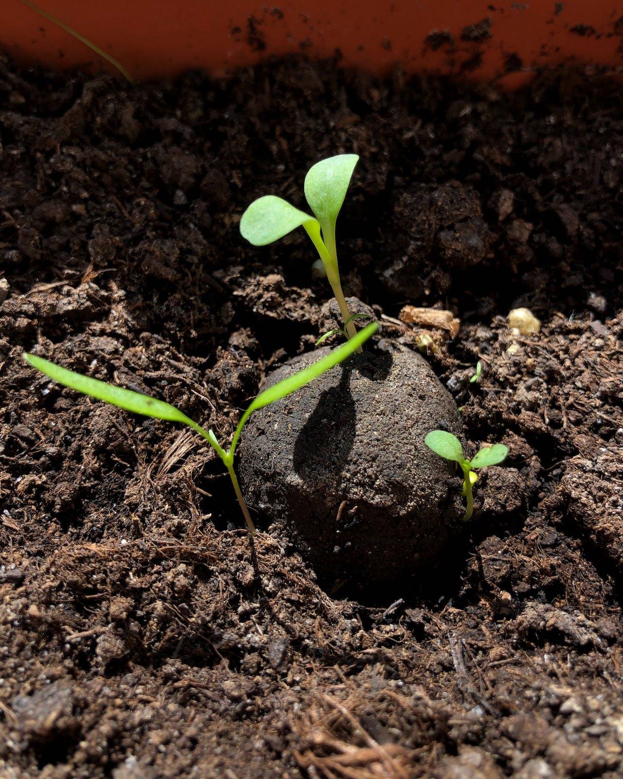 Ferien zuhause: Idee 9, Gärtnern mit Samenbomben