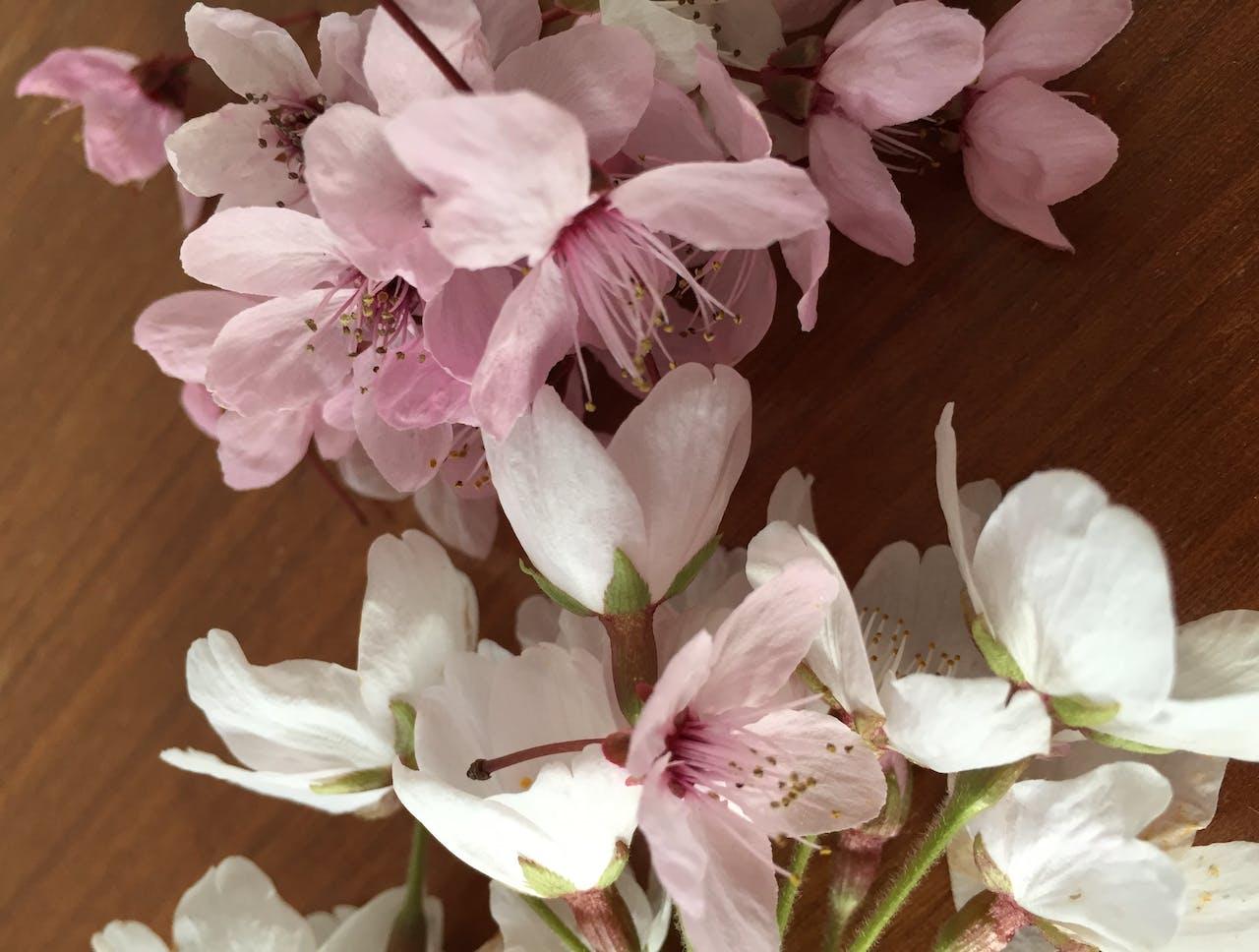 Moduloris machen: Karte mit getrockneten Blüten