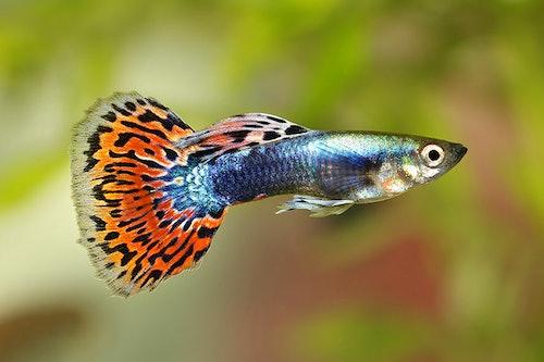 Aquaristik Tipps für Einsteiger