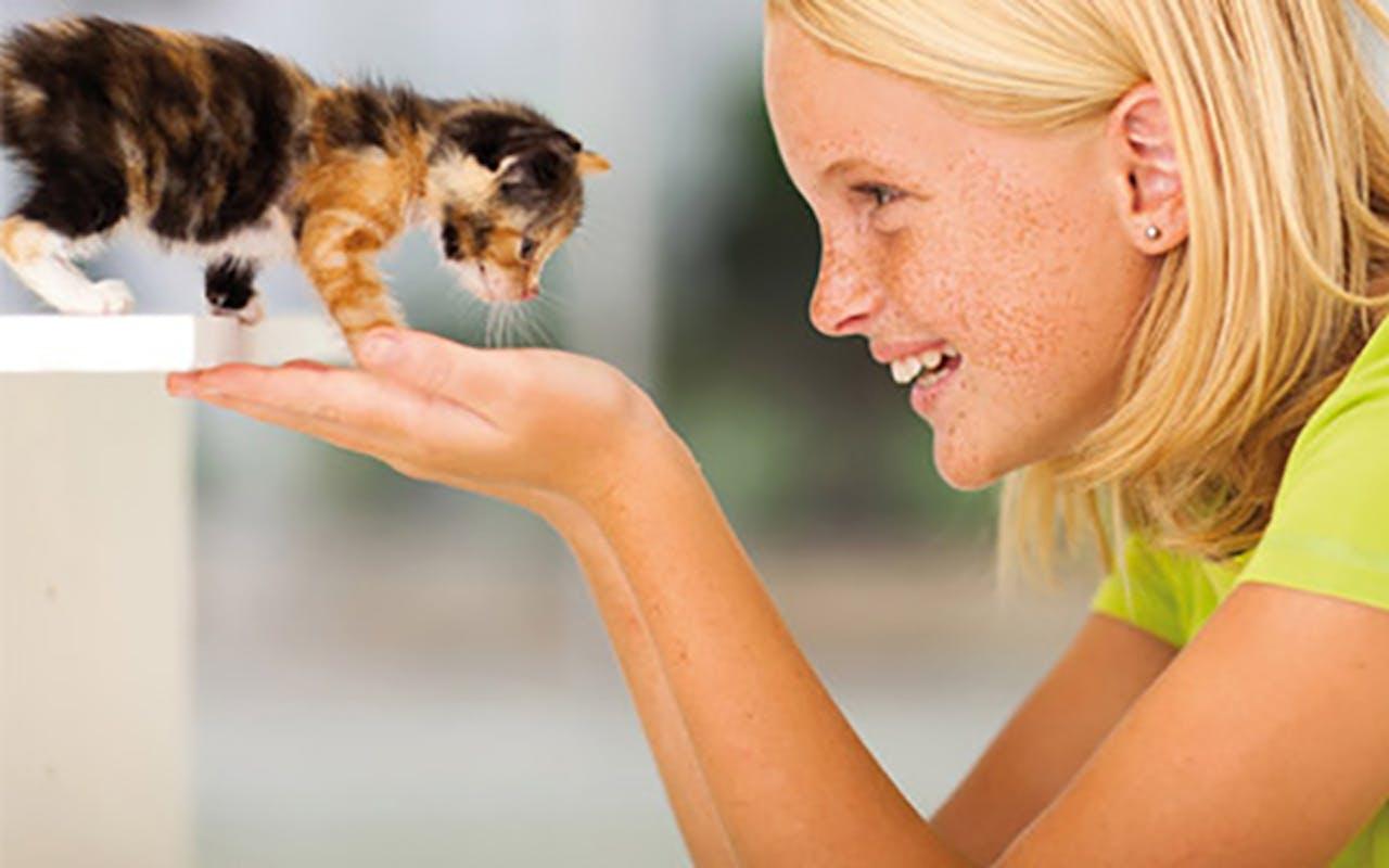 Wissenswerte zur Katzenanschaffung