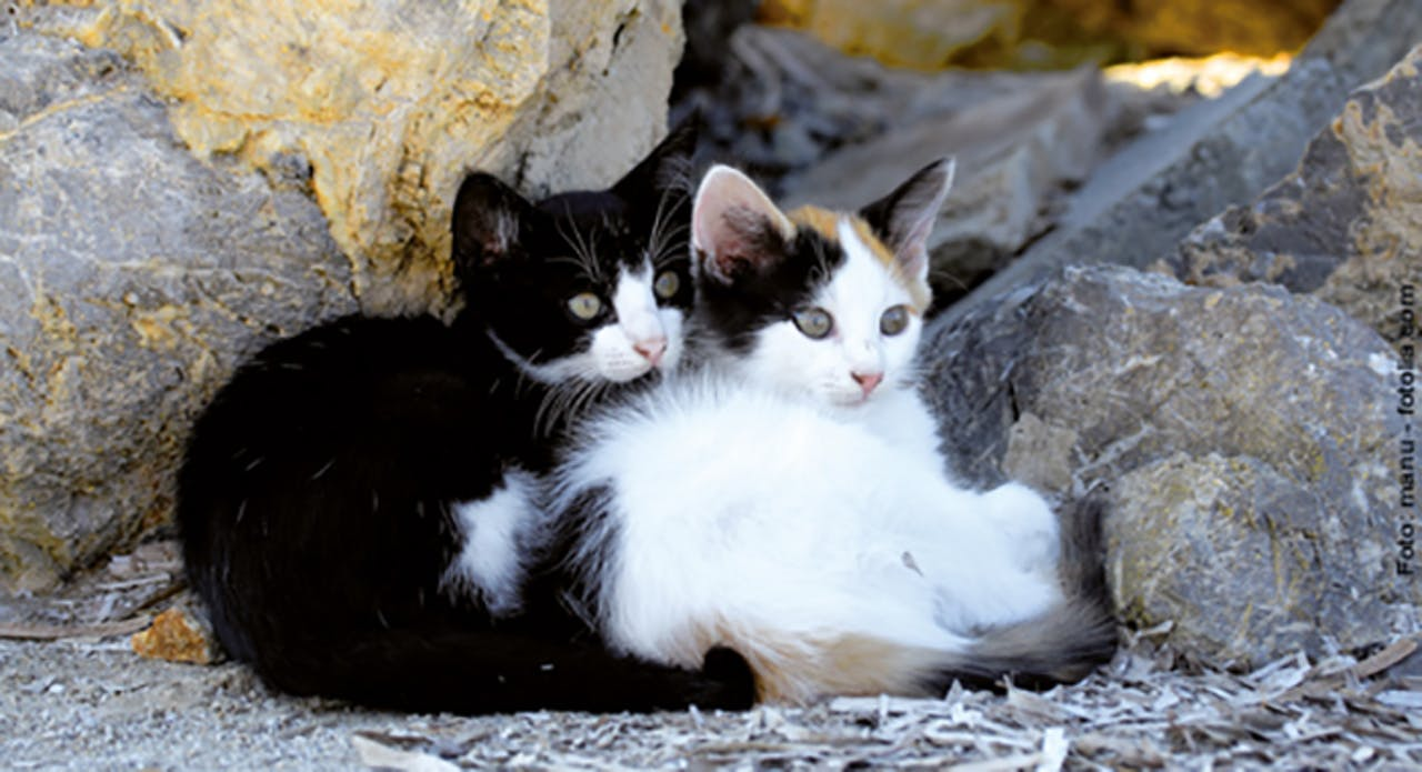Hitzschlag bei Katzen