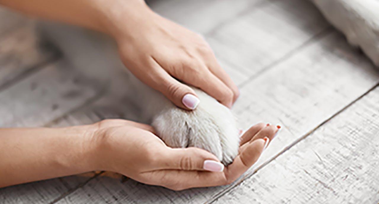 Pfoten und Krallenpflege bei Hunden