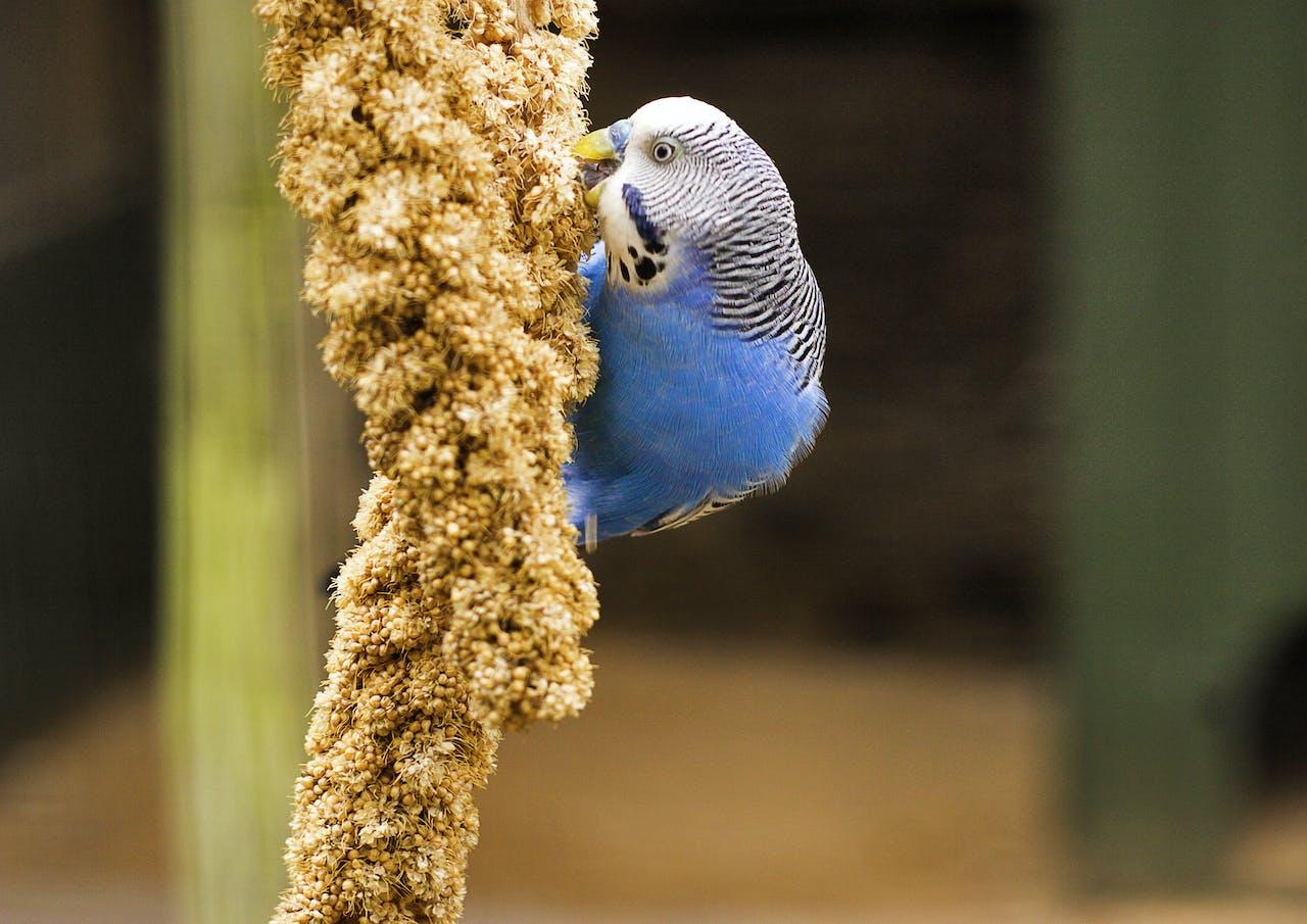 Snacks für Vögel