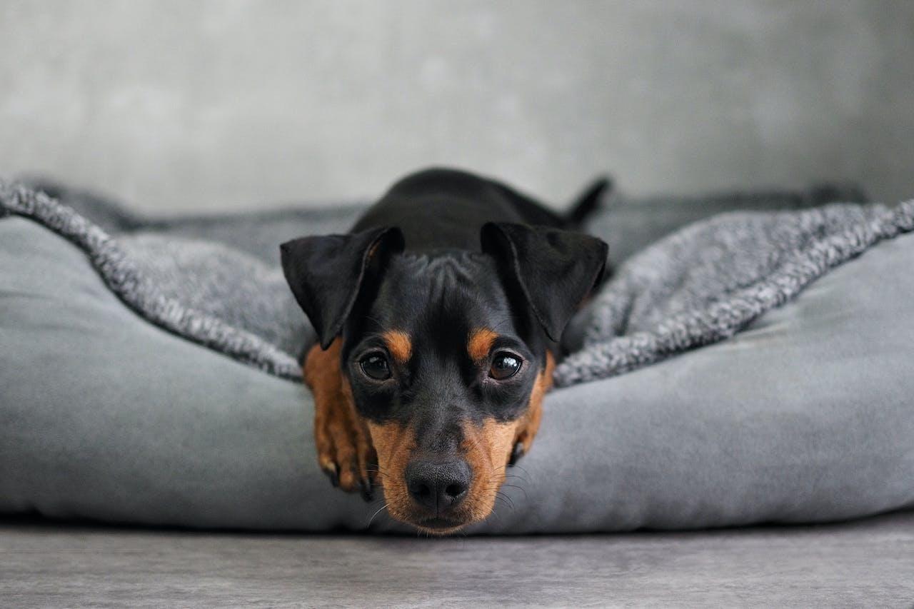 Körpersprache von Hunden