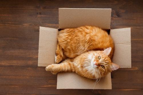 Erstausstattung für Katzen