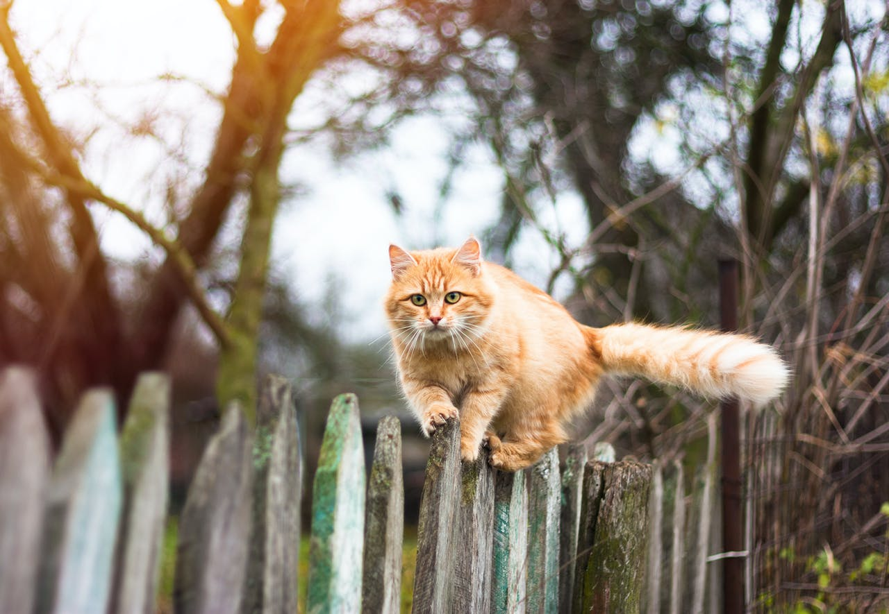 Freigänger-Katze