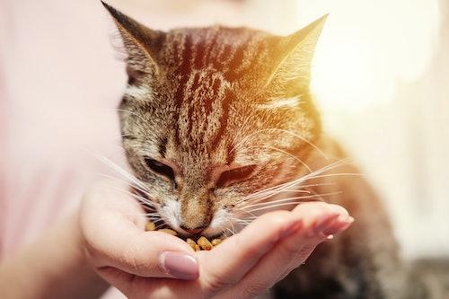 Premium Katzenfutter