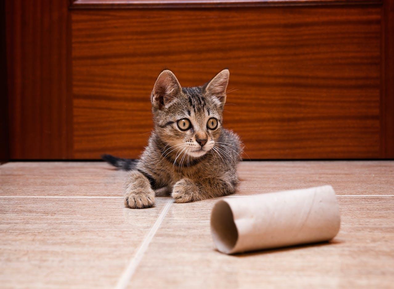 Katze mit Klorolle