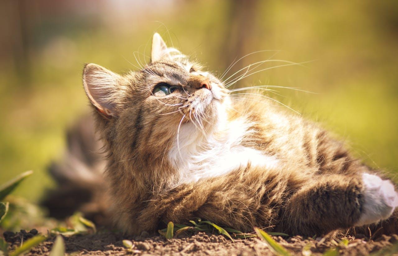 Gewichtszunahme von Katzen nach Kastration