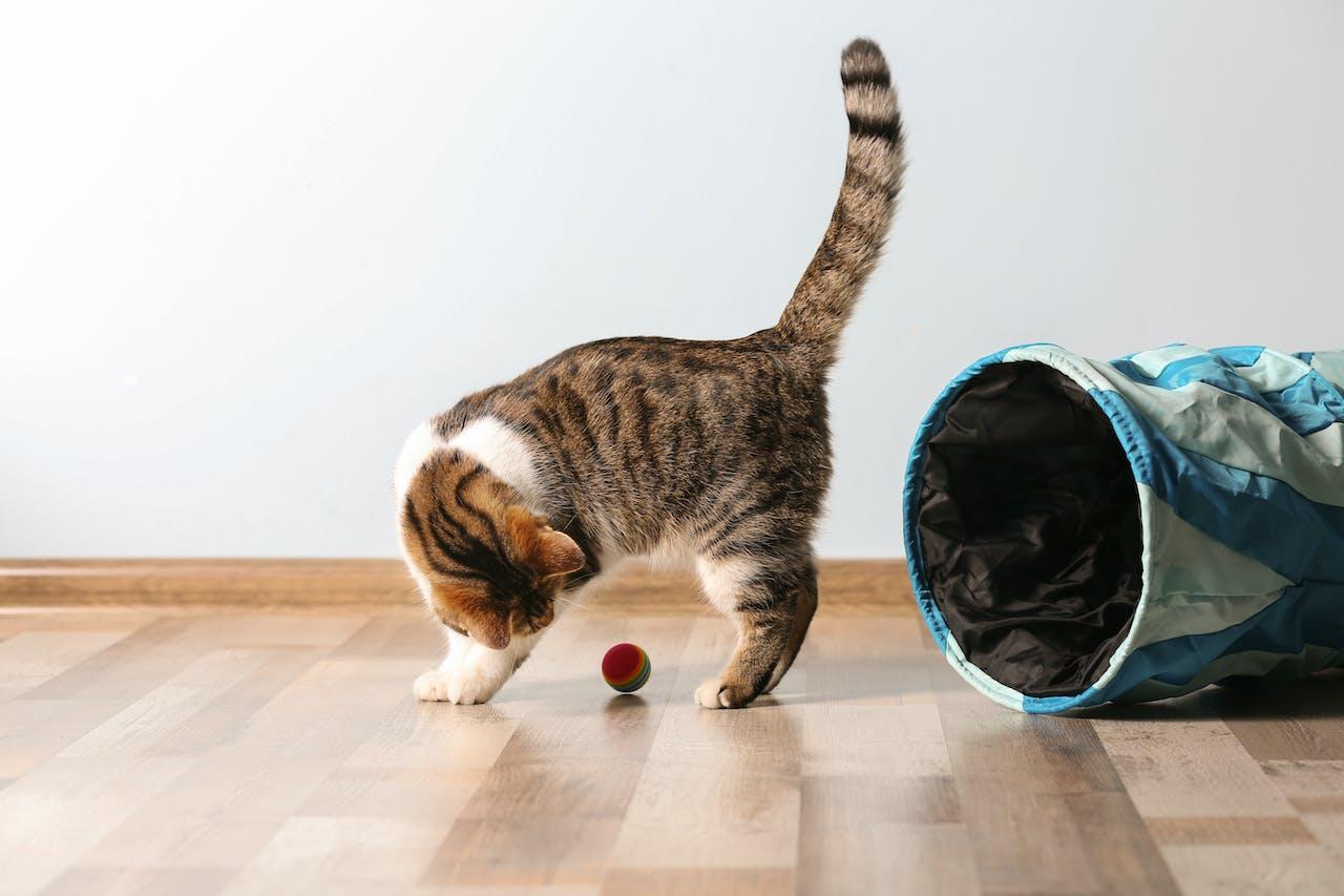Katze am Spielen