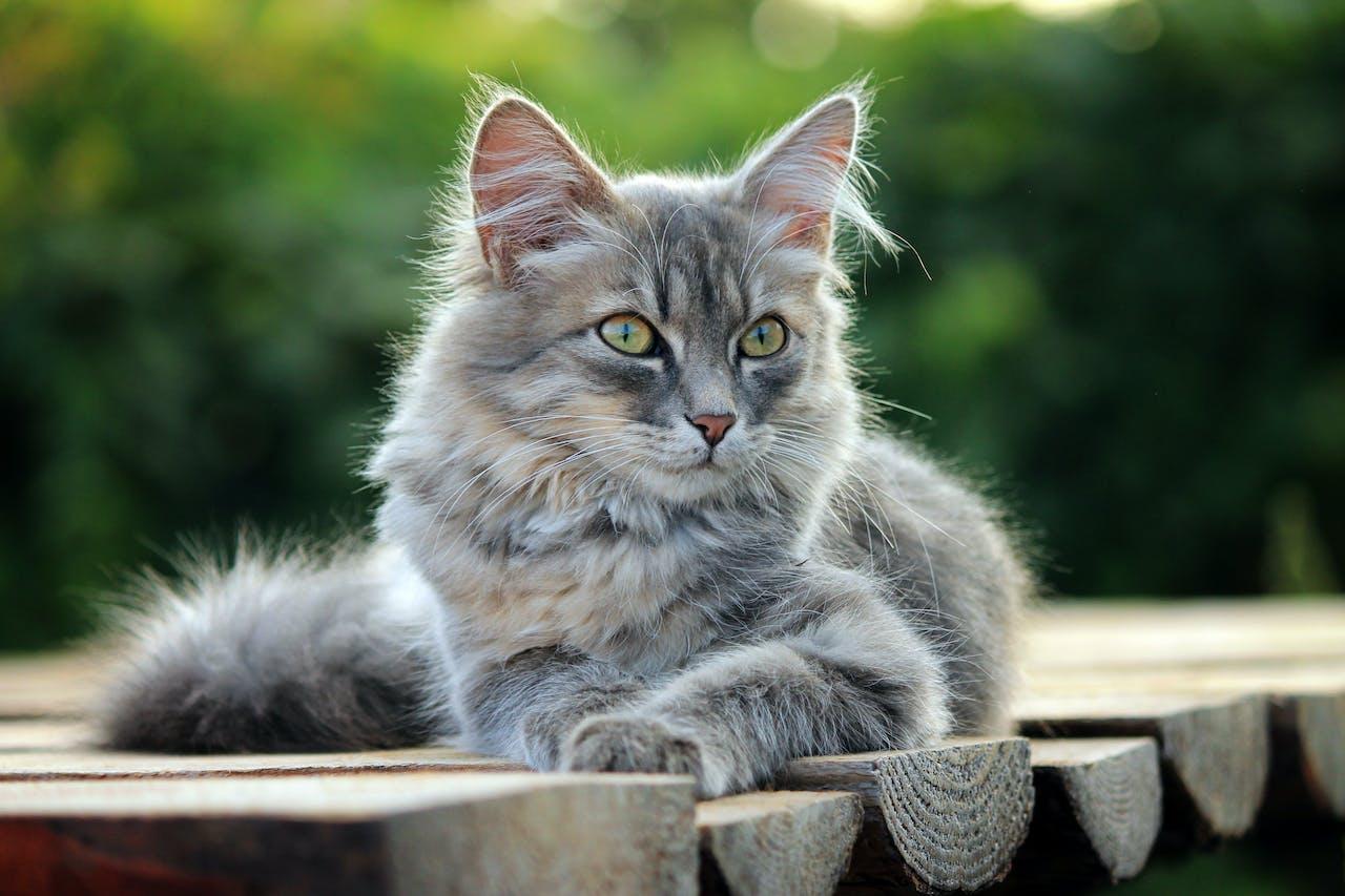Lebensphasen einer Katze
