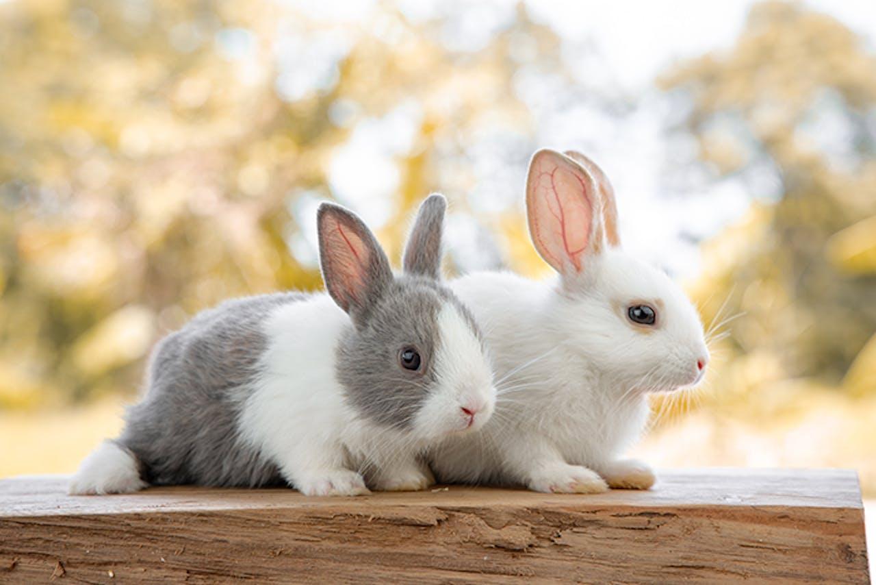 Körpersprache Kaninchen