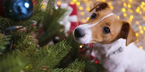 Tierische Weihnachtstipps