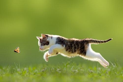Freigänger Katzen