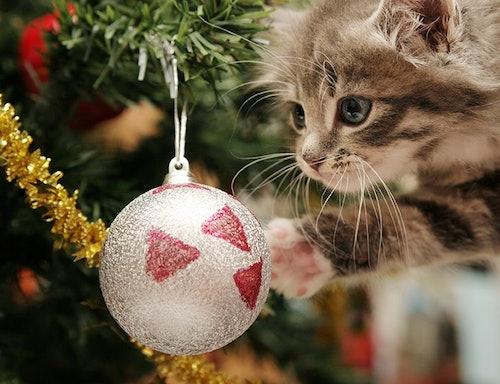 Weihnachtszeit mit Katze