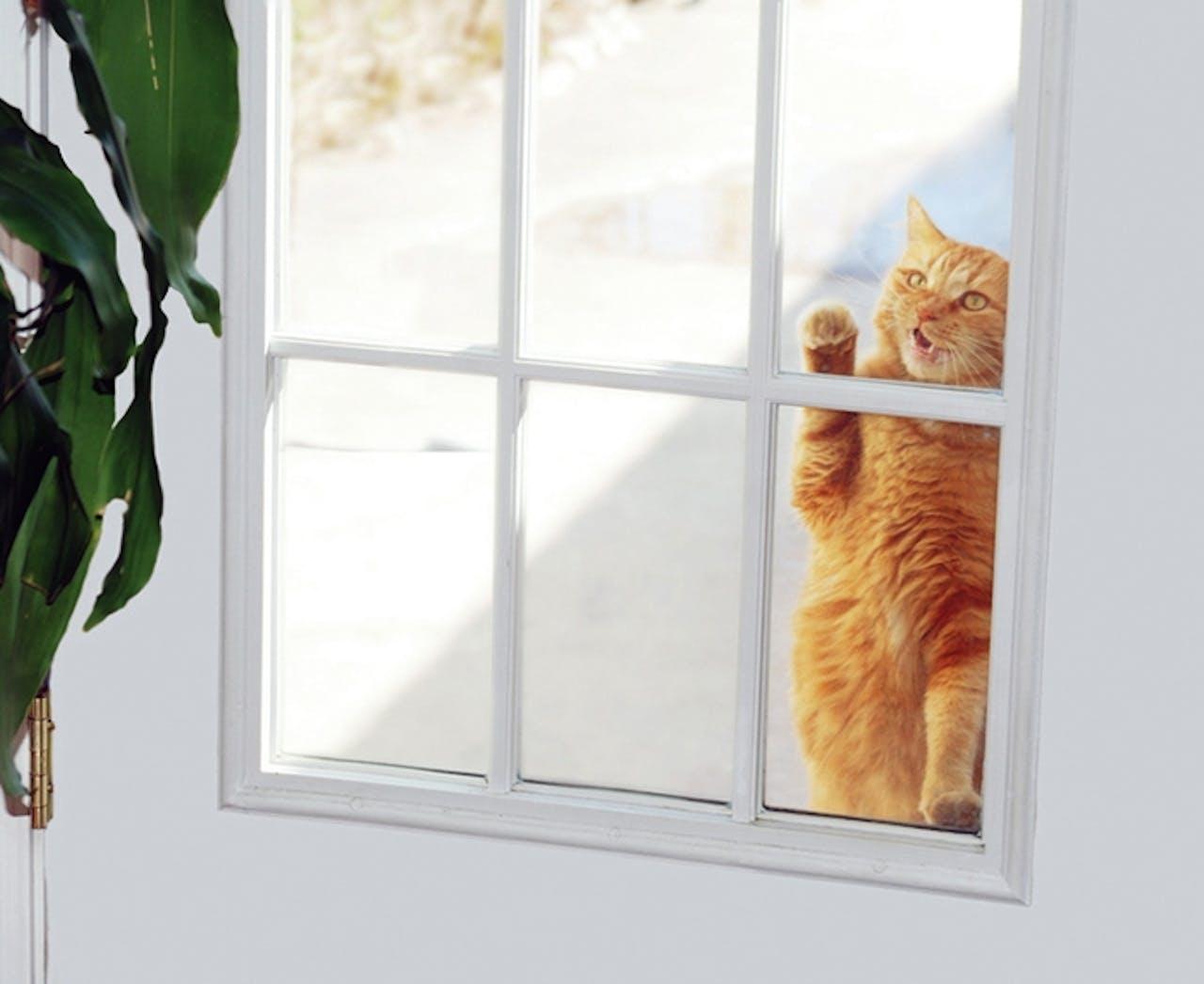 Wissenswertes zur Katzenklappe