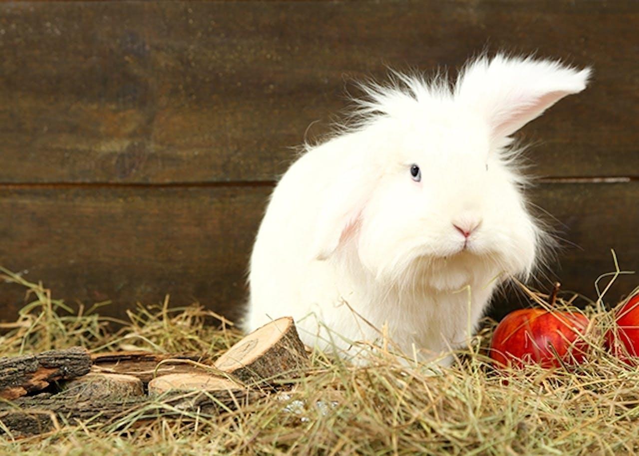Mimik bei Kaninchen