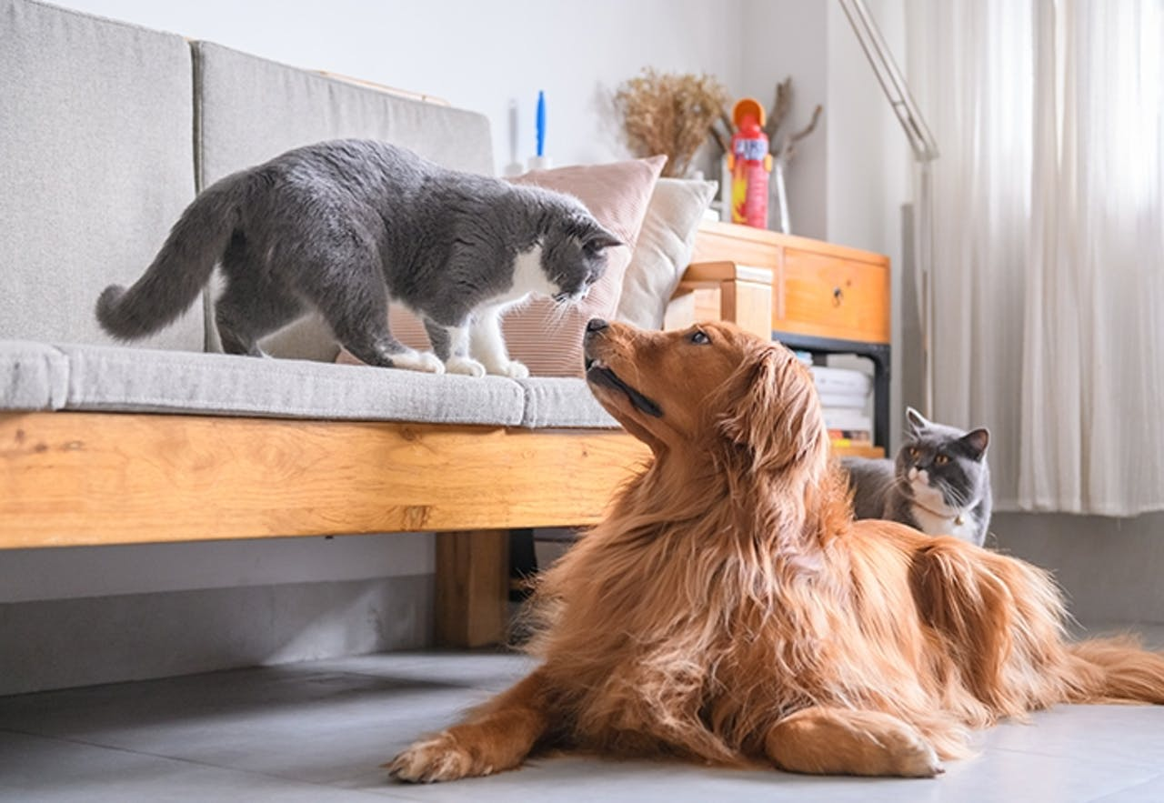 Zusammenleben Hund und Katze