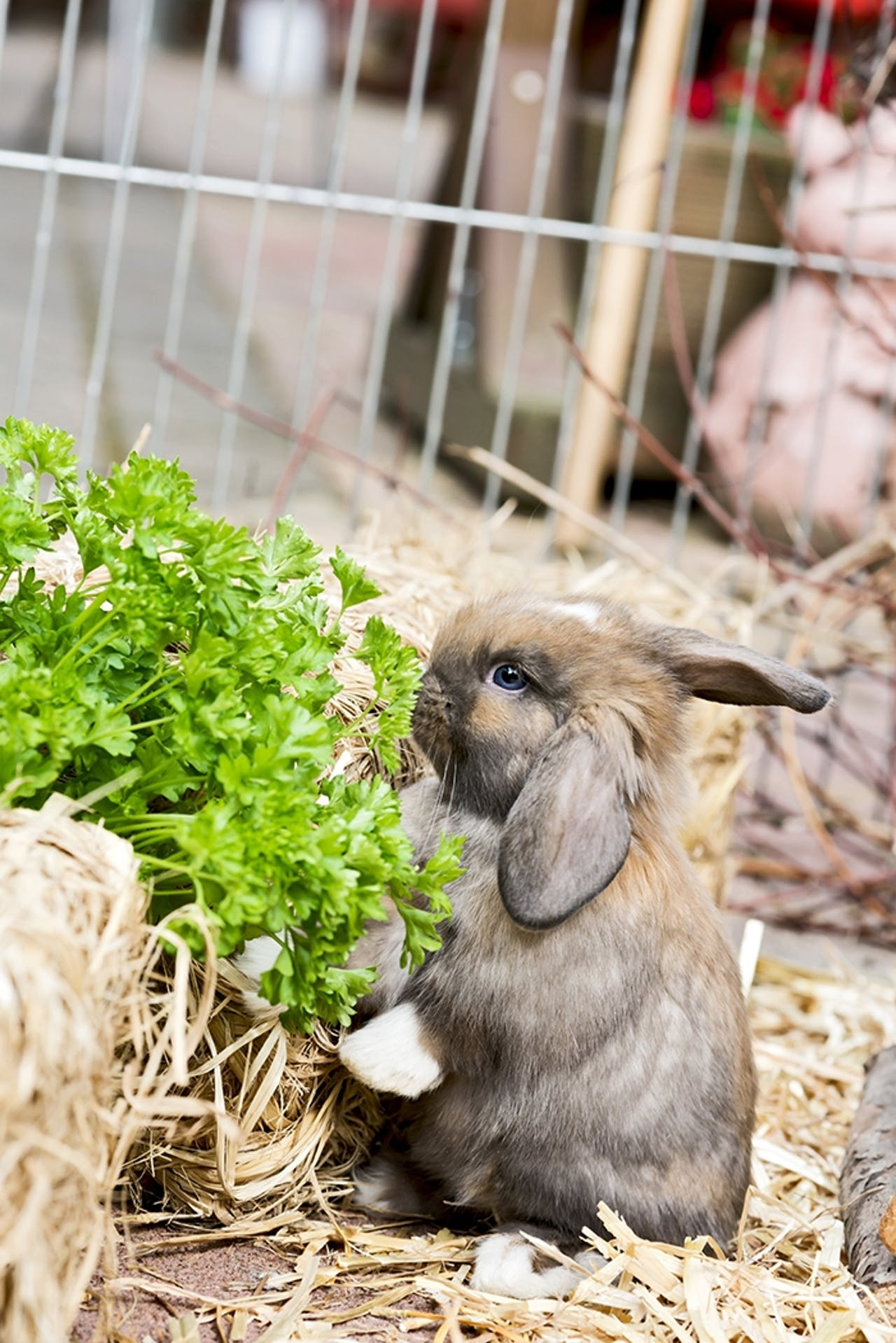 Ernährungstipps für Kaninchen