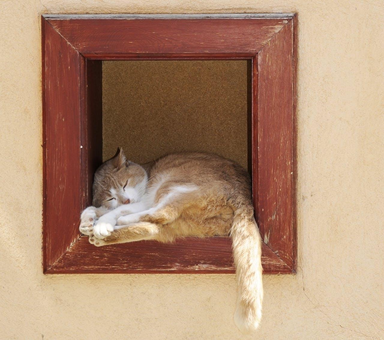 Schattenplatz für Katzen