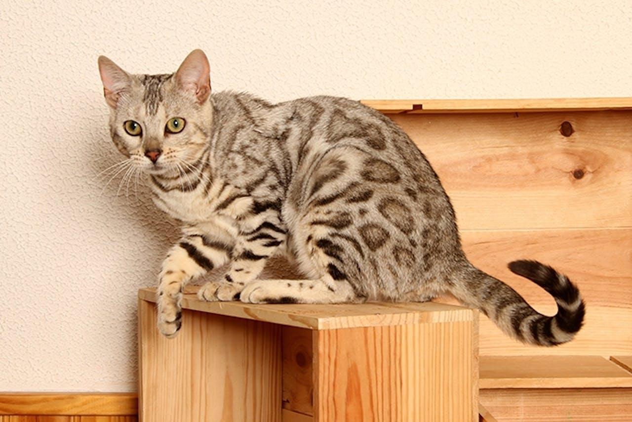 Sichere Katzenwohnung