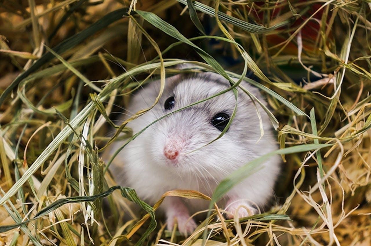 Tipps zur Hamsterhaltung