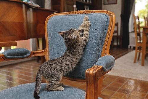 Katzen Kratzspuren