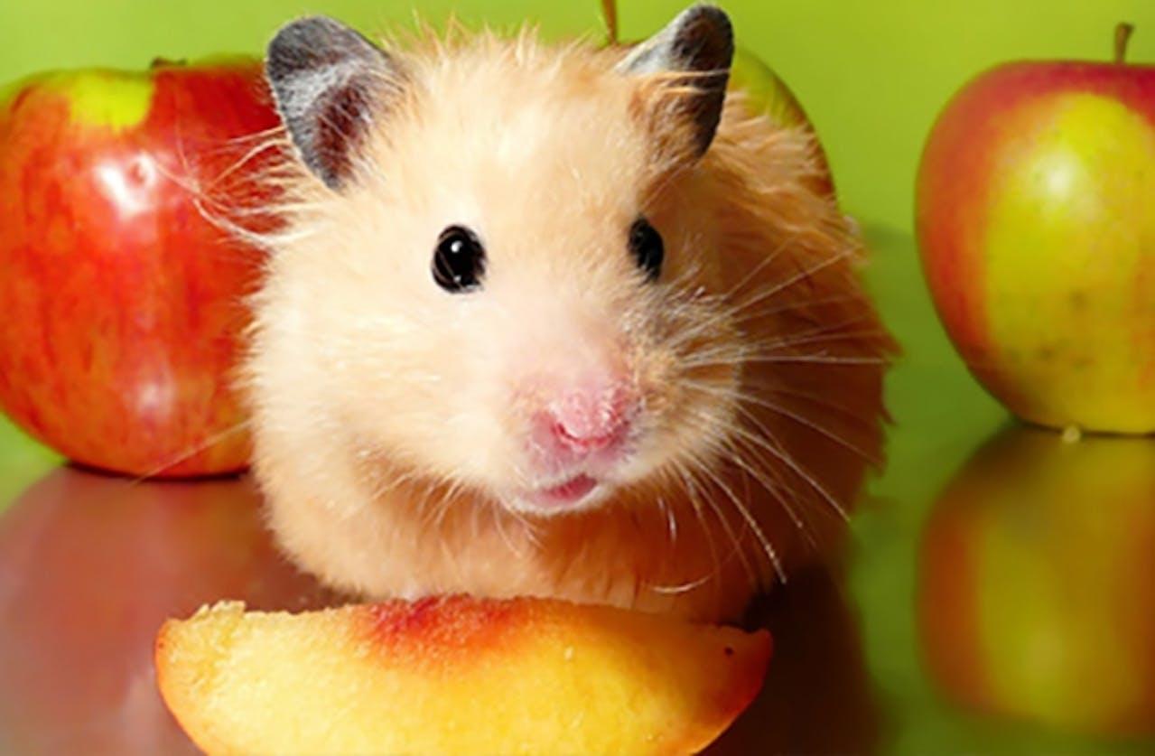 Frischfutter für Hamster