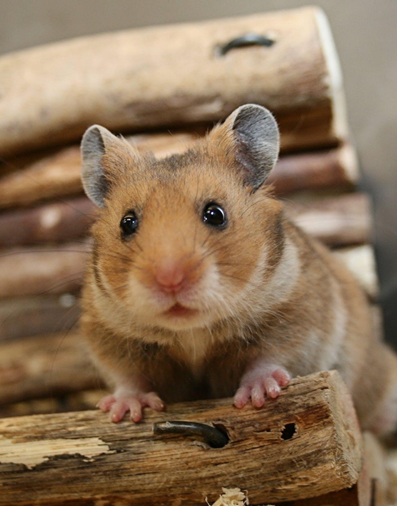 Erstausstattung für Hamster