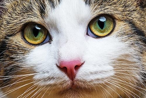 Gesundheitscheck Katze