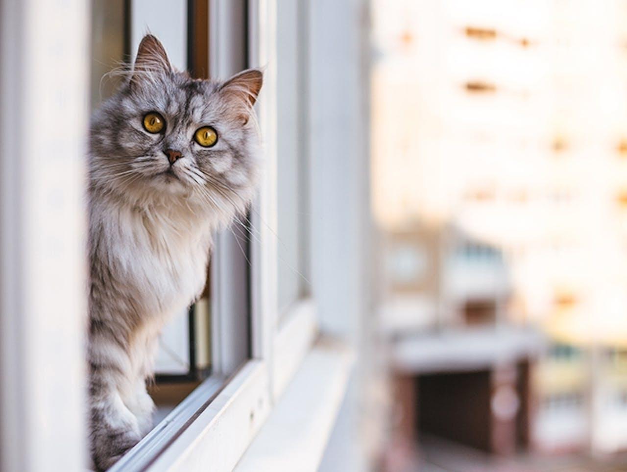 Katzensichere Wohnung