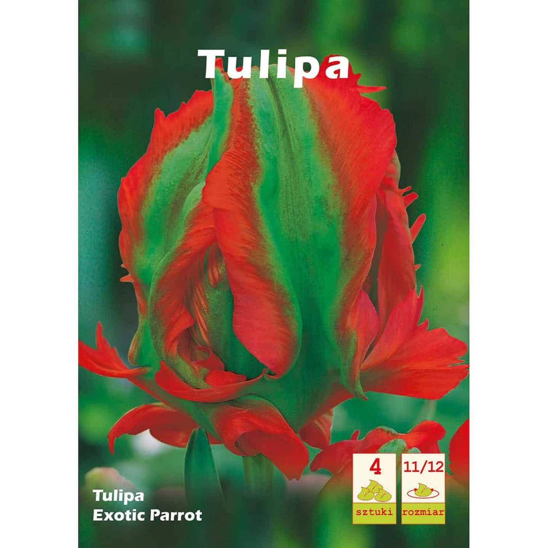 Tulipan Exotic Parrot 4szt