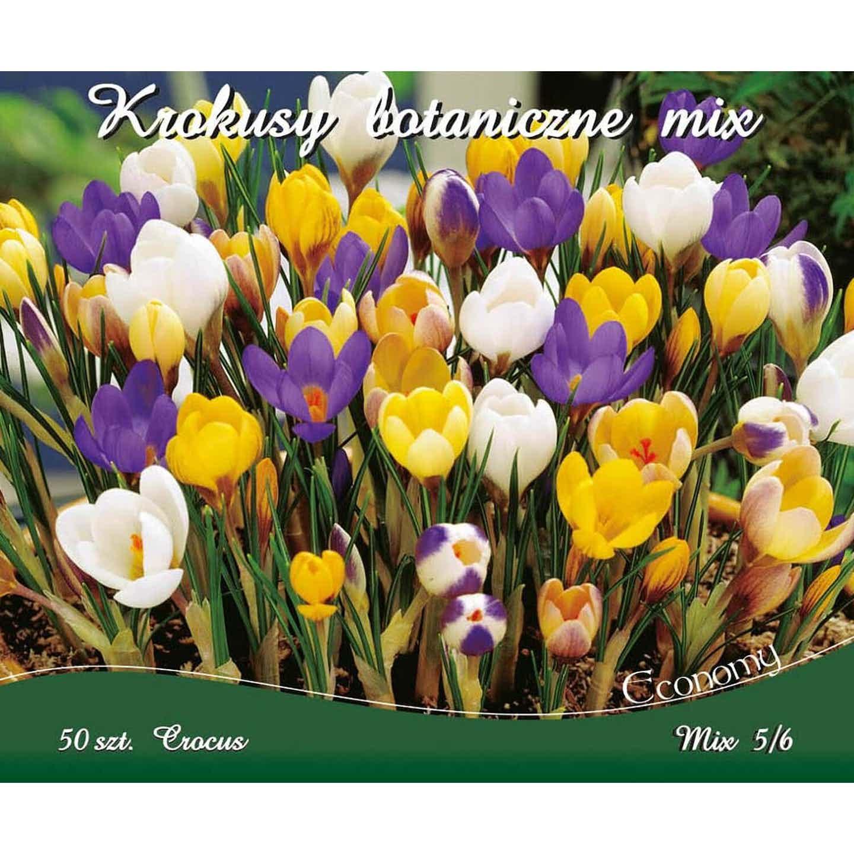 Krokus Crocus Botanical Mix 50szt