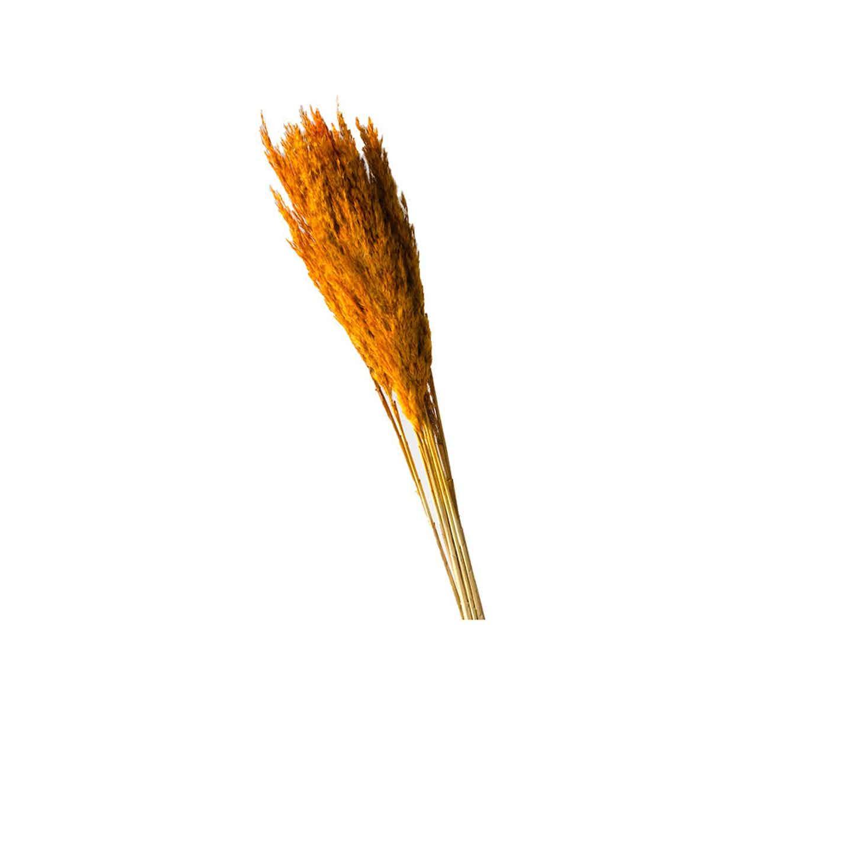 Trawa Plume 80-90cm 12-14szt pomarańcz  70g